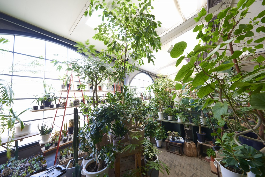 cotoha店内の観葉植物