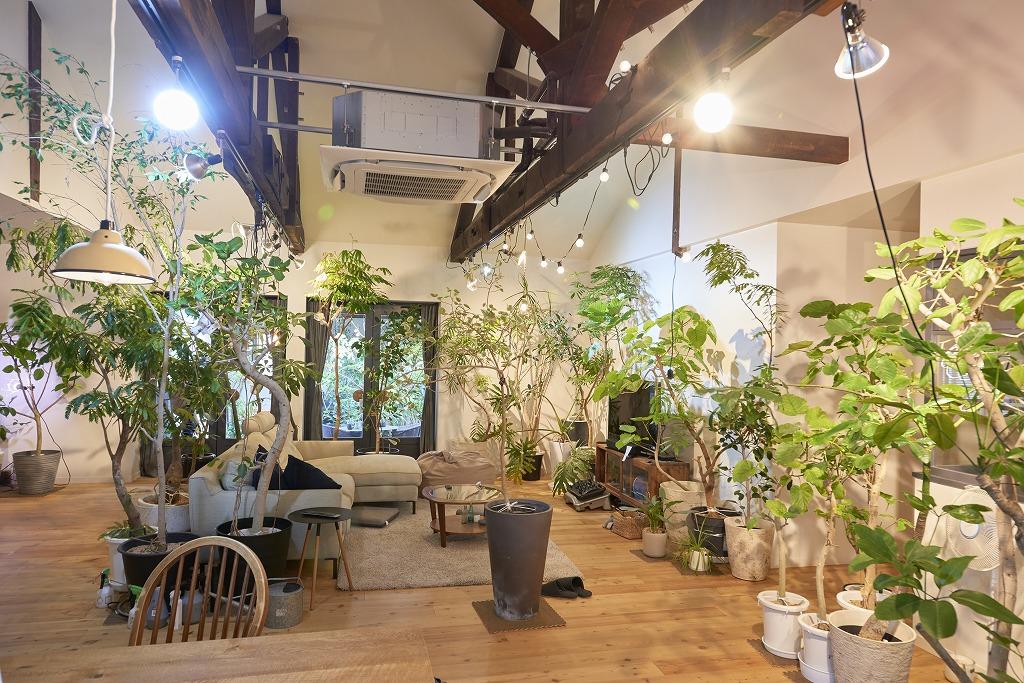観葉植物とリビング